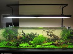 Aquascape,
