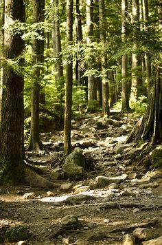 lynn loop path ~ North Vancouver, Canada