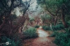 Taking the Path to Dreamland. Be brave, Walk alone - Australia. Click picture to see the full image. Check out my page for more travel, nature and landscape photography projects.
