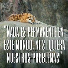 """""""Nada es permanente en este #mundo, ni siquiera nuestros problemas"""" #goodmorning #felizdia #frases #pensamientos #reflexiones #vida #fortaleza"""
