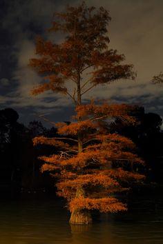 ✯Night Tree