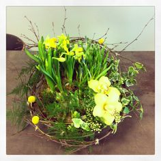 Easter Easter, Flowers, Plants, Inspiration, Design, Biblical Inspiration, Easter Activities, Plant