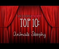 Top 10 Sleepy Animals