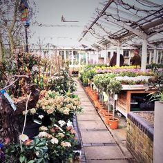 Clifton Nurseries, London