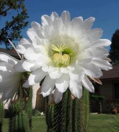 "You can see and find a picture of Big Flower Pictures with the best image quality at ""Photography Pics"""
