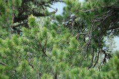 Fotoreport: V Kôprovej doline je prales rovnaký ako pred tisíc rokmi Soda, Plants, Beverage, Soft Drink, Sodas, Plant, Planets, Fresh Water