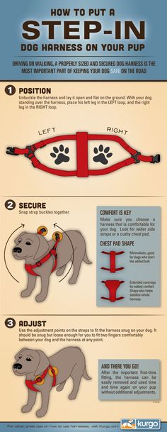 How To Put A Harness On Your Dog - The Lazy Pit Bull http://www.thelazypitbull.com/2014/02/how-to-put-a-harness-on-your-dog/