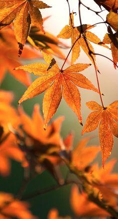 fall colors....
