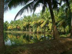 Homestay and Canoe tours from Munroe Island through the Ashtamudi Lake Backwaters. Duck Farming, Kerala Backwaters, Kerala Tourism, Best Model, Canoe, Boat, Tours, River, Island