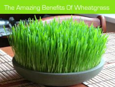 The-Amazing-Benefits-Of-Wheatgrass
