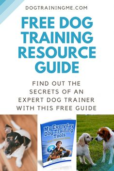 13823 Best Puppy Training images in 2019