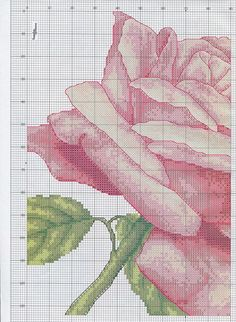 Rose - # 1 SAVED