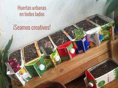 ¡Se creativo, usa materiales reciclados en tu huerto urbano! Be creative, use recycled materials in your urban garden!