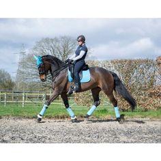 LeMieux ProSport Suede Dressage Square - Teal - Saddlecloths & Pads - Saddlery - Tack | Equestrian Performance