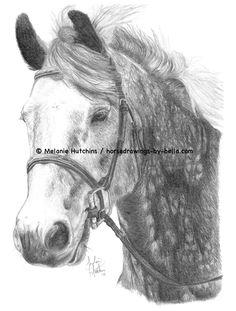 Portrait of Beaker.  Copyright Melanie Hutchins / horsedrawings-by-bella  Follow me on Facebook: https://www.facebook.com/Horsedrawingsbybella.MelanieHutchins Twitter: https://twitter.com/MelHTheArtist YouTube: https://www.youtube.com/channel/UCZDEjNKuowAo92BhnMWWBzA