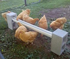 Chicken Coop - - DIY Cinder Block Chicken Feeder - super easy to setup and cheap too. Building a chicken coop does not have to be tricky nor does it have to set you back a ton of scratch. Chicken Garden, Backyard Chicken Coops, Chickens Backyard, Chicken Coop Pallets, Chicken Tractors, Chicken Roost, Cheap Chicken Coops, Diy Chicken Coop Plans, Water Feeder For Chickens