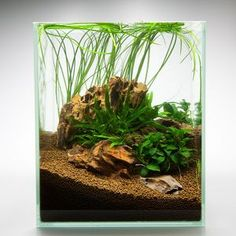 Nano Aquarium Decoraties: NanoNature Drakensteen Set