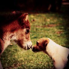 Emilia   #miniaturehorse #ponny  #pinies #horselife #caballos #criaderoeltrebol #caballosminiaturas #caballo #miniscolombia