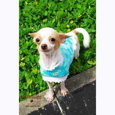 Turquoise Dog Coat Cute Cat Clothes Handmade Crocheted DK819 by Myknitt (3) #chihuahua #cutedog #puppy #myknitt #DIY #crochet