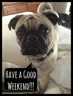 Pug says have a good weekend!