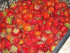 Makacska konyhája: Hagyományos eperdzsem Naan, Strawberry, Fruit, Food, Essen, Strawberry Fruit, Meals, Strawberries, Yemek