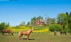 Tilaa hevosille