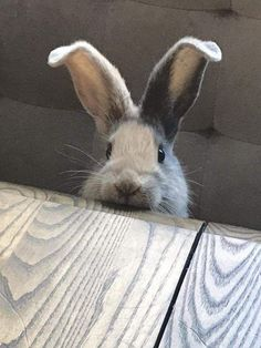 Wha 'sup? Baby Bunnies, Adorable Bunnies, Bunny Rabbits, Cute Bunny, Funny Bunnies, Easter Bunny, Infinity War, Baby Animals, Animals And Pets