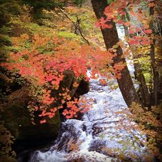 Fall at Ryuzu waterfall Nikko Japan Www.Couchflyer.com #gf_Japan #japan_daytime_view #nature_archive #phos_japan #ig_japan #bestjapanpics #icu_japan #bestjapanpics #gf_nature #wp_japan @icu_japan @japan_daytime_view @_photo_japan_  @art_of_japan @instagramjapan @wp_japan @japan_of_insta @lovers_nippon #nature_brilliance #ig_myshot #tv_nature #ig_color #rsa_nature #outdoors #bestnatureshots @team_jp @leaveonlyleaves @igersjp