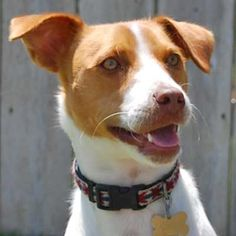 Handsome new adoption profile photo of Gabe! Love that one-ear-up, one-ear-down look!