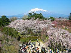 春の弘前城と岩木山 (Spring colored Hirosaki Castle and Mt. Iwaki)