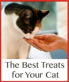 The Best Treats for Your Cat-homemade cat treats