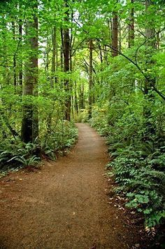 Tryon Creek State Park Trail | One of my favorite places to be when I was growing up.
