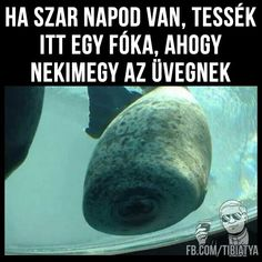 Szegényke! De tényleg jó. Kicsit lapos a feje. Funny Photos, Funny Images, Funny Fails, Funny Jokes, Bad Memes, Lol So True, Me Too Meme, Big Bang Theory, Funny Moments