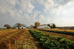 The Green Earth Institute CSA - The McDonald Farm owned by The Conservation Foundation