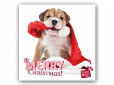 Hunderassen WeihnachtskartenMyrna Weihnachtskarte: Hab den Weihnachtsmann erwischt - Bulldogge Welpe