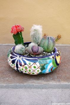 Picture of How to create a cactus dish garden & keep your finger spine free
