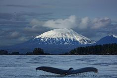 sitka alaska | Mt. Edgecumbe and a fluke - Sitka, Alaska at dusk. | Flickr - Photo ...