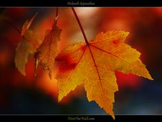 The last of the fall leaves © Nishanth Gopinathan