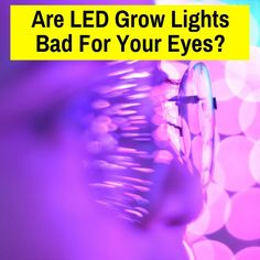 Are LED Grow Lights Bad For Your Eyes? Learn if you should be taking measures to protect your vision when working beneath grow lights. Led Grow Lights, Eyes, Projects, House, Log Projects, Blue Prints, Home, Cat Eyes, Homes