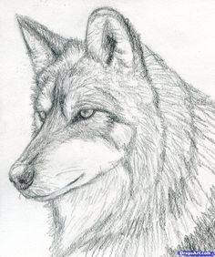 how to draw a wolf head, mexican wolf step 8