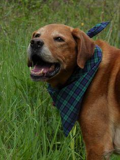 Cute Dogs, Labrador Retriever, Cute Animals, Labrador Retrievers, Pretty Animals, Cutest Animals, Cute Funny Animals, Labrador, Funny Dogs