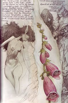 """Arthur Rackham - A Midsummer Night's Dream """"The Fairy Flew Away with the Changeling"""" Brian Froud, Arthur Rackham, Fantasy Paintings, Fantasy Art, Illustrations, Illustration Art, Christina Rossetti, Art Deco Print, Cicely Mary Barker"""