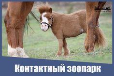 В Корольковом саду откроют контактный зоопарк с пони и ослами Подробнее http://www.saratov.kp.ru/online/news/2699897/ #Саратов #СаратовLife