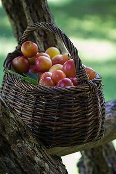 ... chci úrodu mít svoji za domem, do níž jsem sílu svou musel dát ...(Jan Nedvěd)