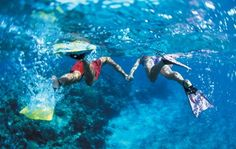 Snorkel or Dive in Fiji! Check out the latest deals from Travelscene - www.travelscene.com