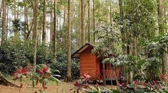 mention temen kamu yang belum bisa moveon dari Bandung buat ngobatin #RinduBandung nya nih ada foto dari @vaniatw taken at Taman Hutan Raya Juanda -------- Di Taman Hutan Raya Juanda terdapat banyak tempat wisata yang keren. Mulai dari bagian hutan dengan pepohonan yang tinggi. Hingga beberapa wisata air terjun seperti Air Terjun Maribaya dan air terjun Omas yang keren. Tak lupa di Taman Hutan Raya Juanda ini juga terdapat gua peninggalan zaman Belanda yang berkesan misterius. Taman wisata…