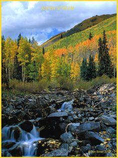 aspen colorado in the fall   Colorado Nature and Wildlife Images, Aspen Stream
