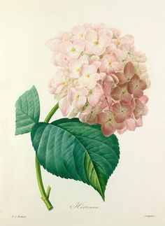 Beautiful Royal Horticultural Society floral prints from Easyart | Flowerona