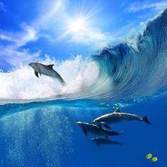 Dolphins - Delfini