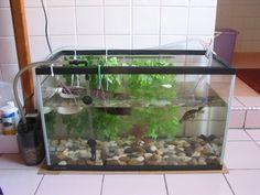 Turtle tank I like the rocks